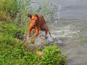 Umím plavat